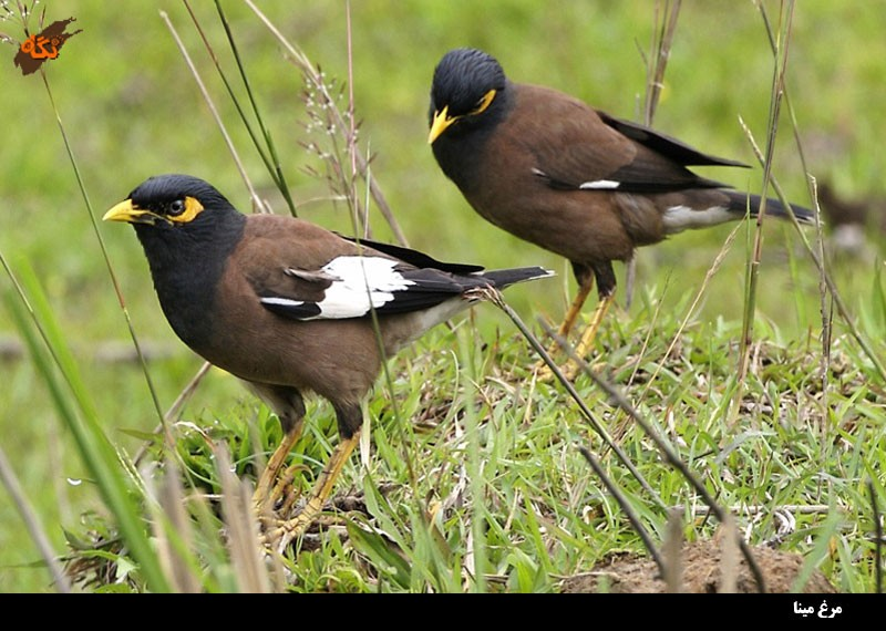 common birds of bangladesh essay Free birds papers, essays, and those who believe birds are a direct result of dinosaurs and those who feel dinosaurs and birds must have had a common.